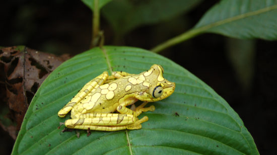 OriginalBeans_Esmeraldas_Ecuador_frog_rainforest_02